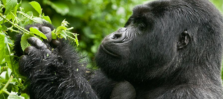 queen elizabeth wildlife safaris - 3 days uganda gorillas safari