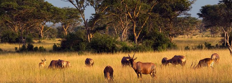 queen elizabeth  wildlife safaris