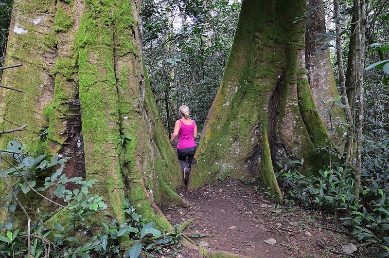 nature walk at kibaleforest national park