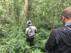 Kalinzu forest chimpanzee tracking