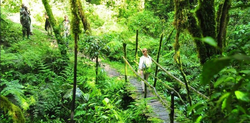 nature walk in bwindi