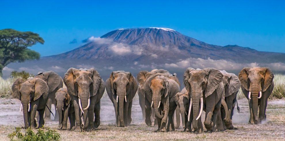 Amboseli national park - Kenya national parks, amboseli park
